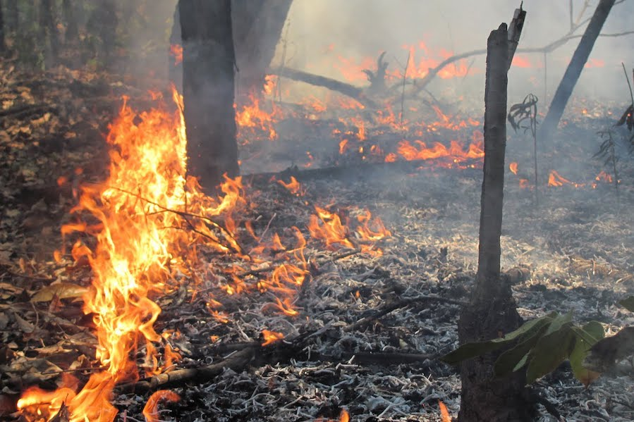 Study shows the impact of forest burning on biodiversity